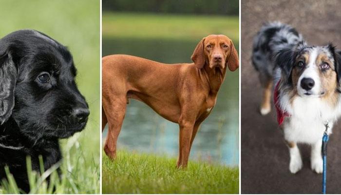 Kouvolan suosituimmat koirat